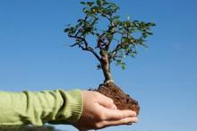 Вклад Kyocera в защиту экологии оценен независимыми экспертами